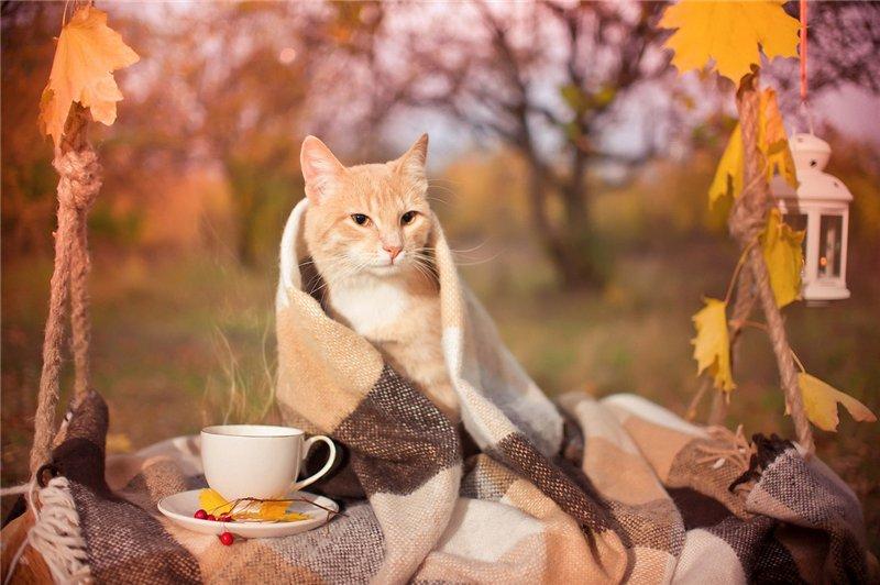 осень доброе утро картинки